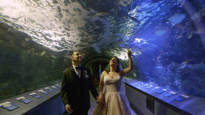 newport-aquarium-wedding-videographer001